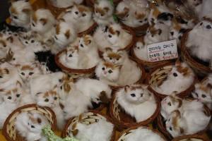 Kittens at Insa-dong