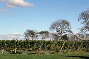 Sakonnet Vineyards