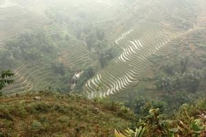 Terraced rice fields